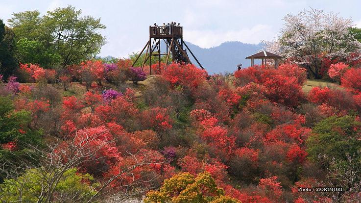 ■ 西都原 高取山公園展望台 宮崎県西都市