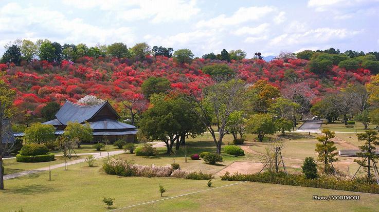 ■ 6千本のミツバツツジ咲く高取山公園 宮崎県西都市
