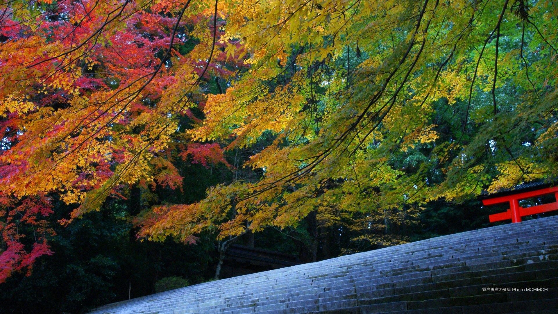 Autumn Leaf Viewing : 単位 水 : すべての講義